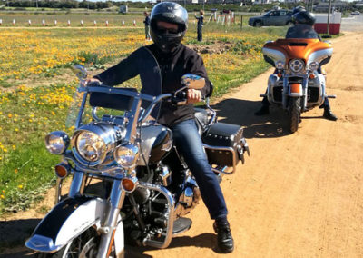 Harleys in the daisies